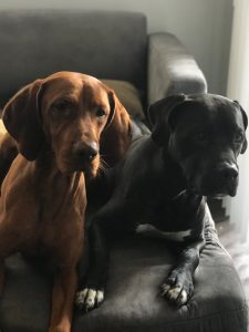 photo of dogs